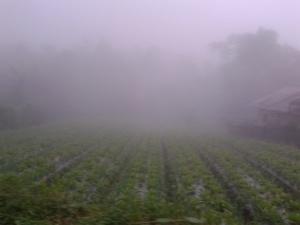 Kabut di Penakir